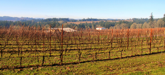The Vineyards and Countryside of Willamette Valley - Portland, OR